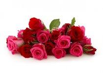 paket-mawar